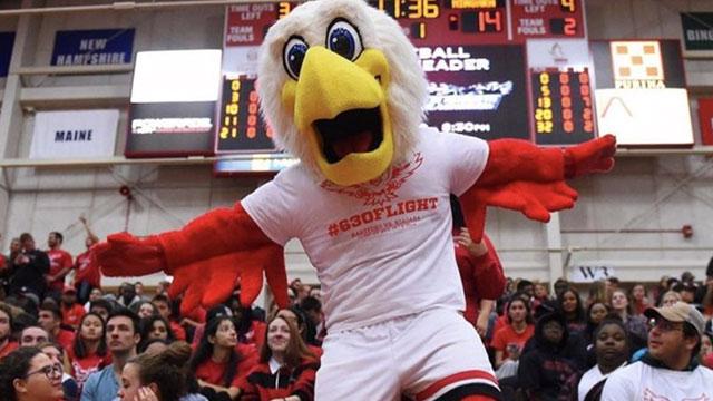 Howie the hawk dancing